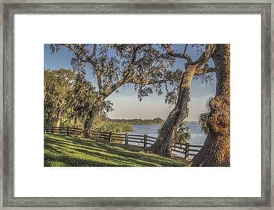 Framed Print featuring the photograph Trees With A View by Jane Luxton