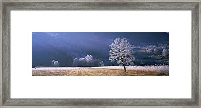 Trees With Frost, Franstanz, Tyrol Framed Print by Panoramic Images