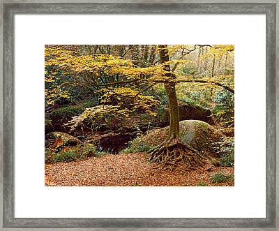 Trees With Granite Rock At Huelgoat Framed Print by Panoramic Images