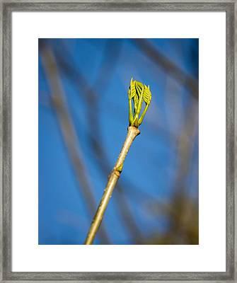 treeSpring Framed Print