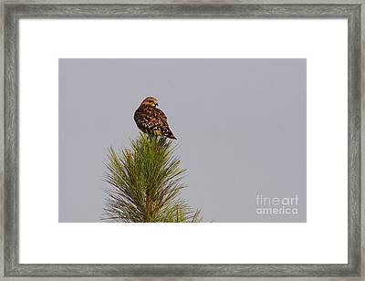 Treetopper Framed Print