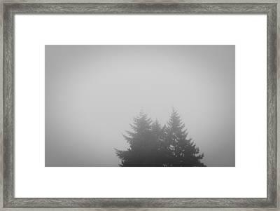 Treetops In Fog Framed Print