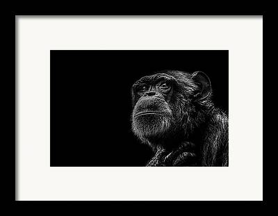 Ape Framed Prints