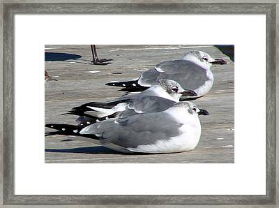 Framed Print featuring the photograph Tres Amigos by Linda Cox