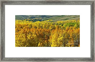 Tri Color Aspen Framed Print