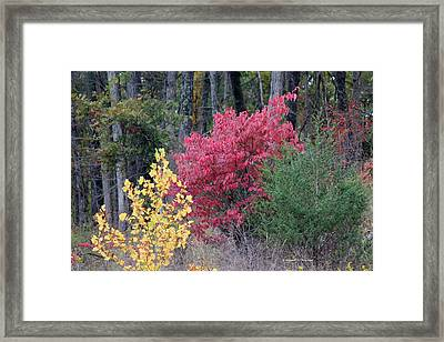 Tri Color Framed Print by Edward Hamilton