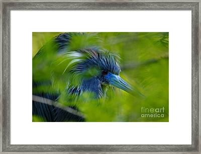 Framed Print featuring the photograph Tri-colored Heron Concealed    by John F Tsumas