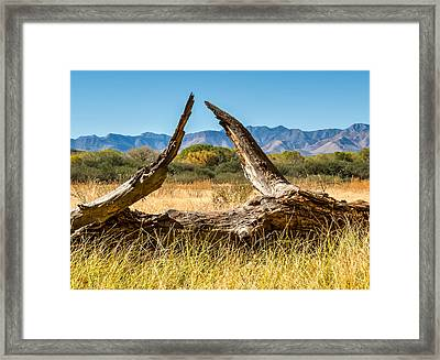 Framed Print featuring the photograph Triangle by Beverly Parks