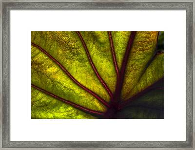 Tributaries Framed Print by Debra and Dave Vanderlaan