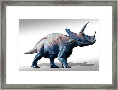 Triceratops Dinosaur Framed Print by Mark Garlick
