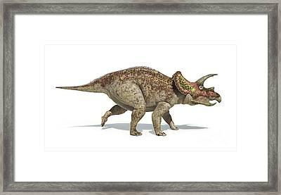 Triceratops Dinosaur On White Framed Print by Leonello Calvetti