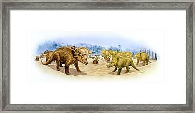 Triceratops Dinosaurs Framed Print
