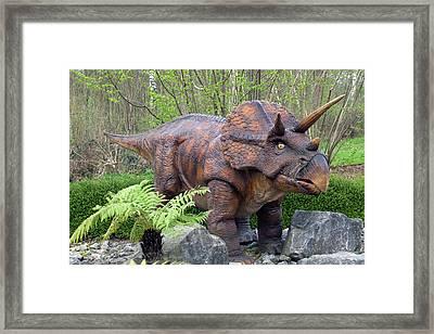 Triceratops Model II Framed Print by Dirk Wiersma