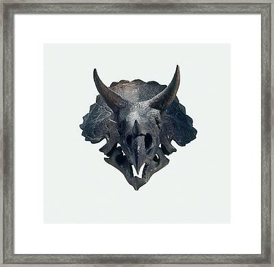 Triceratops Skull Framed Print