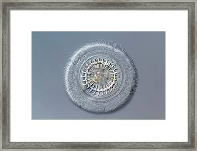 Trichodina Ciliate Framed Print by Gerd Guenther
