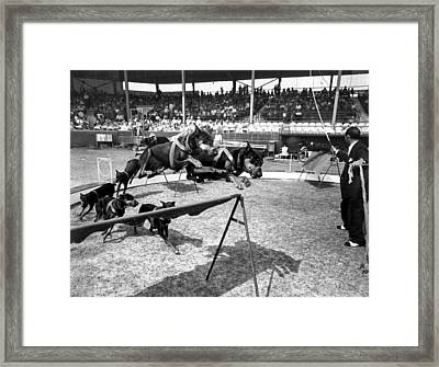 Trick Dogs Framed Print by Retro Images Archive
