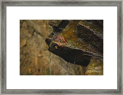 Trickling Water Framed Print by Mary Carol Story