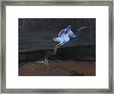 Tricolored Heron Framed Print by Kirsten Wahlquist