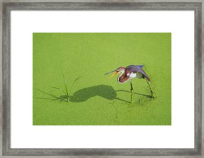Tricolored On Green Framed Print