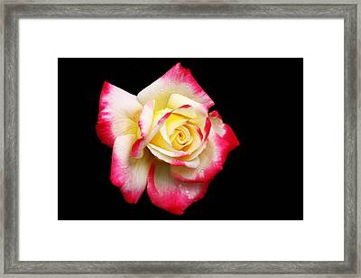 Framed Print featuring the photograph Tricolour Magesty by Doug Norkum