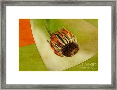 Triflori Framed Print