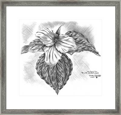 Trillium 1996 Framed Print by Thomas Griffith