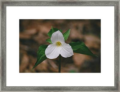 Framed Print featuring the photograph Trillium by David Porteus