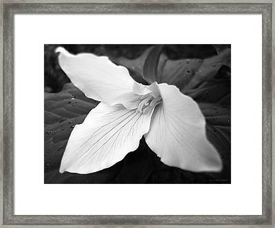 Trillium Flower In Black And White Framed Print by Jennie Marie Schell