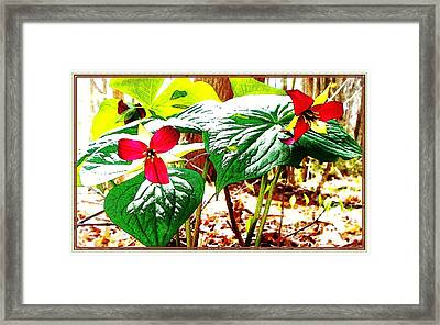 Trillium In The Woods Framed Print