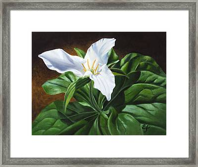 Trillium - Oil Painting On Canvas Framed Print