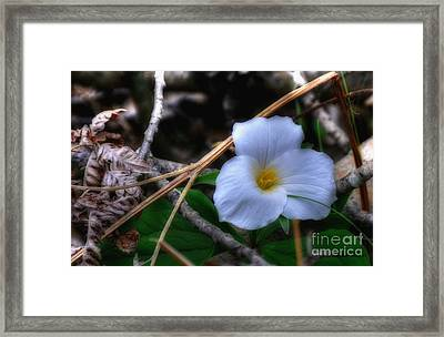 Framed Print featuring the photograph Trillium On County C by Trey Foerster