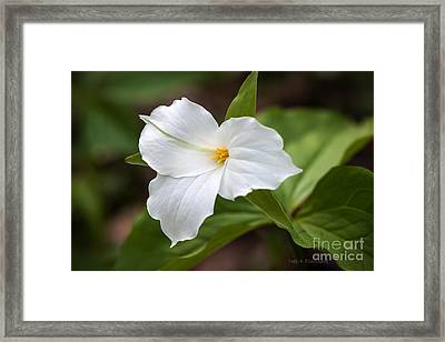 Framed Print featuring the photograph Trillium by Todd Blanchard