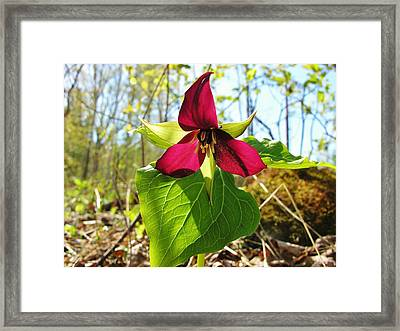 Framed Print featuring the photograph Trillium Wild Flower by Sherman Perry