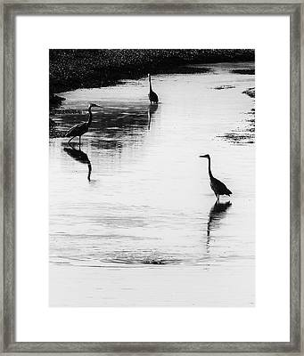 Trilogy - Black And White Framed Print