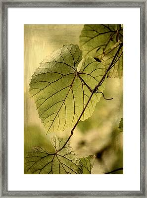 Trinity Grape Leaves Framed Print