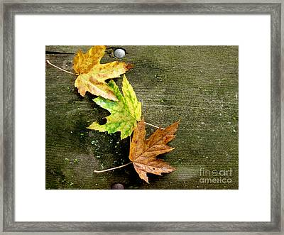 Trio Of Leaves Framed Print by Marilyn Smith