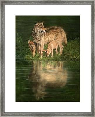 Trio Of Wolves Framed Print by David Stribbling
