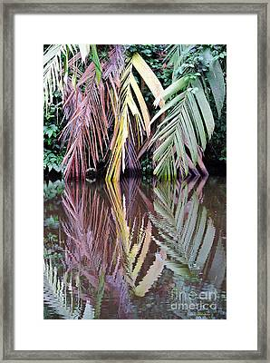 Trio Reflected Framed Print
