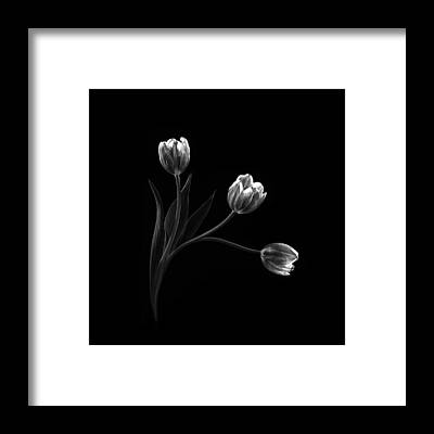 Blooming Framed Prints