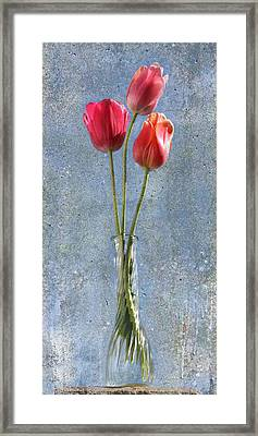 Trio Framed Print by Terri Harper