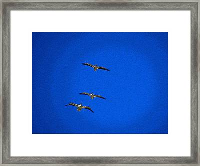 Framed Print featuring the photograph Trio by Tom DiFrancesca