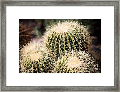 Triple Cactus Framed Print by John Wadleigh
