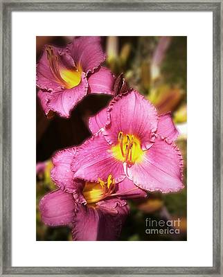 Triple Lilies Framed Print