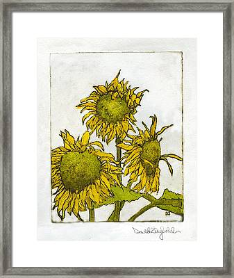 Triple Sunflowers Etching Framed Print by John Stephens