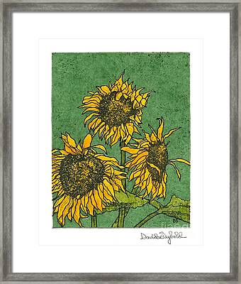 Triple Sunflowers Etching With Full Background Framed Print by John Stephens