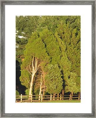 Triple Trees Framed Print by Debbie Nester