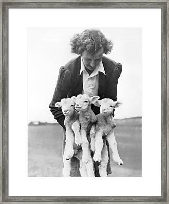 Triplet Lambs Framed Print