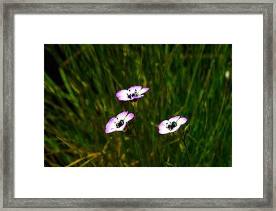Triplets Framed Print by Camille Lopez