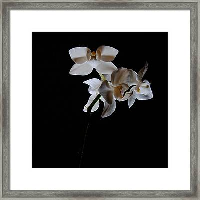 Framed Print featuring the photograph Triplets II Color by Ron White