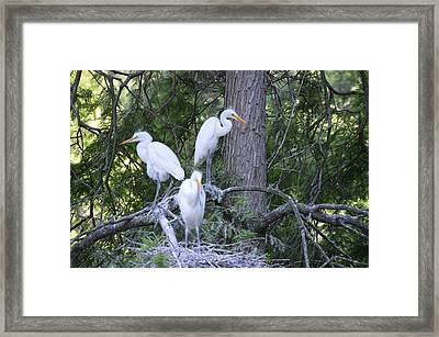 Framed Print featuring the photograph Triplets by Judith Morris